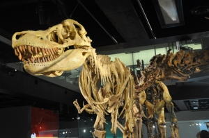 Dinosaurs @ Melbourne Museum