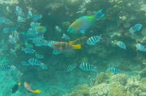 This picture was taken snorkeling in Eilat with a GoPro.