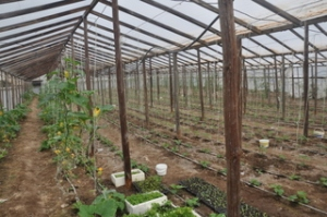 Dimitris' farm and greenhouse