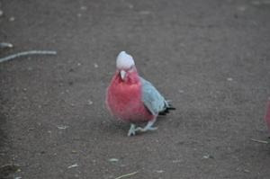 Pretty bird in Perth