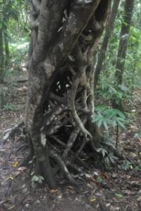 Mesh tree growing over the walkway.
