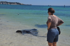 Ilise next to some huge sting rays at Hamelin Bay